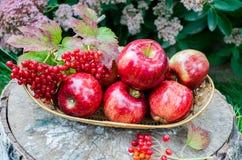 Rote Äpfel mit vibrunum im Korb Lizenzfreies Stockfoto