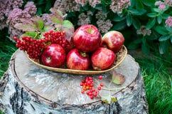 Rote Äpfel mit vibrunum im Korb Stockfotos