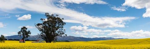 Rote überdachte Gebäude unter den hellen gelben Blumen eines Canolafeldes in Neuseeland Stockfotografie