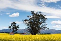 Rote überdachte Gebäude unter den hellen gelben Blumen eines Canolafeldes in Neuseeland Lizenzfreie Stockfotografie