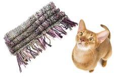 Rote abyssinische Katze Lizenzfreie Stockbilder