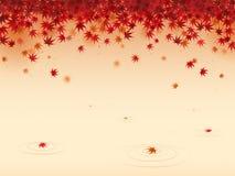 Rote Ahornblätter Lizenzfreies Stockbild