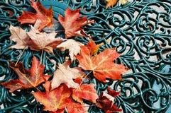 Rote Ahornblätter stockbilder
