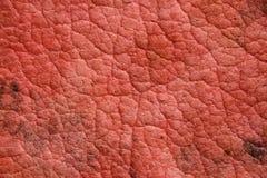 Rote alte schöne Beschaffenheiten mit Sprüngen Lizenzfreies Stockbild
