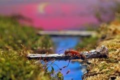 Rote Ameise kreuzt den Fluss auf einem Klotz Stockbilder