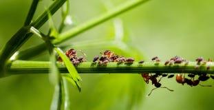 Rote Ameisen auf einem grünen Stamm Lizenzfreie Stockfotos