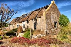 Rote Anlagen vor verlassenem Haus Stockfoto