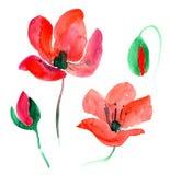 Rote Aquarellmohnblume Stockbilder