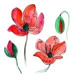Rote Aquarellmohnblume Stockfoto