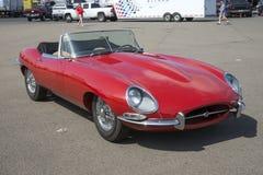 Rote Art des Jaguars e Stockfotos
