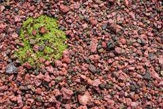 Rote Asche mit Grünpflanze Lizenzfreies Stockbild