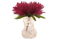 Rote Aster im Vase Stockfoto