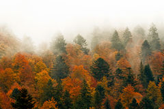 Rote Bäume im Nebel Lizenzfreies Stockfoto