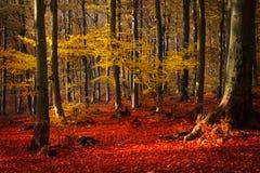 Rote Bäume im Wald stockfotos