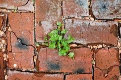 Rote Backsteine masern mit grünem Gras Lizenzfreie Stockfotografie