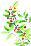 Rote Beeren Stockfotos