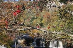 Rote Beeren auf Baum im Herbst, Wasserfall hinten lizenzfreie stockbilder