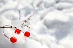 Rote Beeren auf dem Schnee Stockfotos