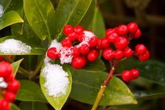 Rote Beeren auf Eis lizenzfreies stockfoto