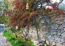 Rote Beeren der Eberesche auf grünem Baum auf der alten Steinwand Lizenzfreies Stockfoto