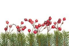 Rote Beeren der Weihnachtsdekoration und Tannenzweige lokalisiert auf weißem Hintergrund Stockfotos