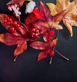 Rote Beeren mit Ahornblättern und -blüten vereinbarten auf einer dunklen Schieferplatte Stockfoto