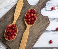 Rote Beeren von reifen Lingonberries lizenzfreie stockbilder