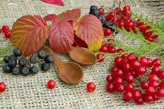 Rote Beeren von Viburnum Lizenzfreie Stockfotos