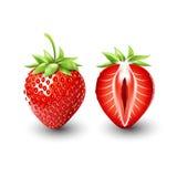Rote Beerenerdbeere und eine Hälfte der Erdbeere, Frucht, transparent, Vektor Lizenzfreie Stockbilder