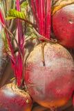 Rote-Bete-Wurzeln Anlage Stockbilder