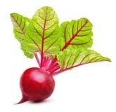 Rote-Bete-Wurzeln mit den Blättern lokalisiert Lizenzfreie Stockbilder
