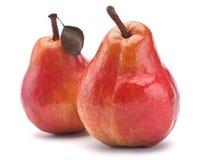 Rote Birnenfrucht Stockbild