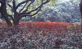 Rote Blätter Lizenzfreie Stockbilder