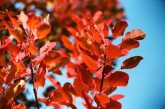 Rote Blätter Stockfotos