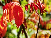 Rote Blätter stockfoto