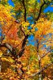 Rote Blätter Lizenzfreie Stockfotos