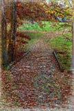 Rote Blätter bedecken die kleine Holzbrücke, die den Gebirgswald einfaßt lizenzfreie stockbilder