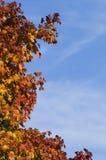 Rote Blätter von Treetop Stockfotografie
