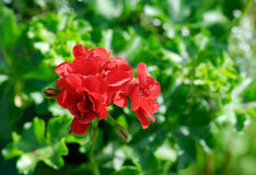Rote Blume über Grün Stockbild