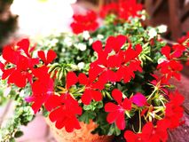 Rote Blume Stockbild