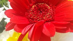 Rote Blume Stockfotos