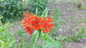 Rote Blume Stockfotos