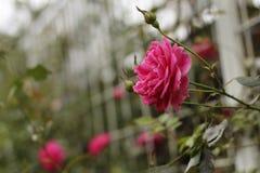 Rote Blume Stockfoto