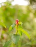 Rote Blume auf bokeh Hintergrund Stockfoto