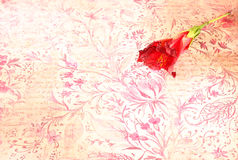 Rote Blume auf buntem Hintergrund der Weinlese Lizenzfreie Stockfotos