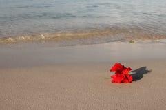 Rote Blume auf dem Strand lizenzfreie stockfotografie