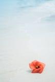 Rote Blume auf dem Strand Lizenzfreie Stockfotos
