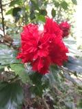 Rote Blume auf Grün Stockbilder