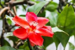 Rote Blume auf grünem Blatthintergrund, schöne Naturansicht Stockfoto