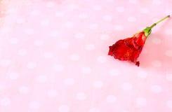 Rote Blume auf Retro- Schmutzhintergrund Stockfotos